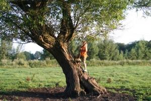 Kopfweide - Bäume helfen bei der Erdung
