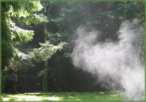 Nebel im Herbstwalde.